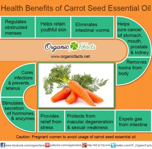 Manfaat Carrot Seed Essential Oil arumnusantara.com